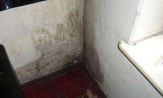 Uciążliwa pleśń na ścianie - skąd się bierze i jak ją zwalczać?