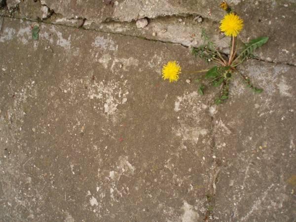 Chemia betonu – wybrane zagadnienia