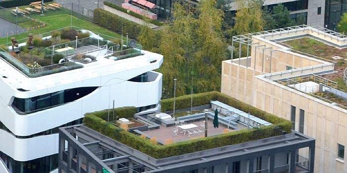 Dachy zielone a poprawa efektywności energetycznej budynków
