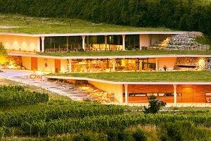 Dachy zielone - skąd ich rosnąca popularność?