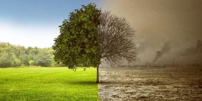 Program Czyste Powietrze – zmiany dotyczące wysokości dofinansowania oraz kotłów węglowych
