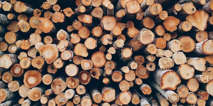 Jakie będą skutki wzrostu cen drewna w Polsce?
