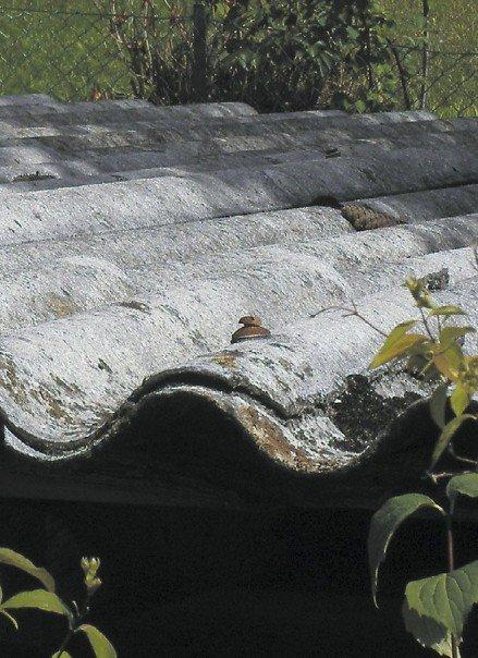 Fot. Proces usuwania nagromadzonych w Polsce wyrobów azbestowych jest i będzie ogromnym wyzwaniem organizacyjnym, fi nansowym, administracyjnym i planistycznym. Na zrealizowanie tego zadania nasz kraj ma czas do 2032 r. www.pl.wikipedia.org