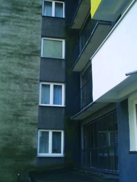 Fot. 1-2. Kolonie glonów i pleśni na ocieplonych ścianach budynków