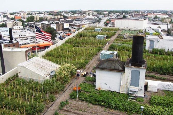 Przykład farmy miejskiej na zielonym dachu, fot. Optigruen