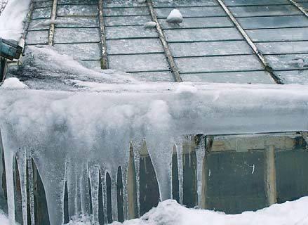 Fot. 6. Strona północna starej użytkowanej jeszcze szklarni. Cały śnieg, który spadł na tę powierzchnię, stopił się i utworzył szerokie, długie sople obejmujące cały okap grubą podstawą. Stało się tak mimo niewielkich temperatur utrzymujących się wewnątr.