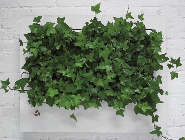 FOT. 2. Zielone ściany stwarzają możliwość wprowadzenia dużej liczby roślin do budynków biurowych i wykorzystania zdolności roślin do regeneracji powietrza; fot.: FLORABO [13]