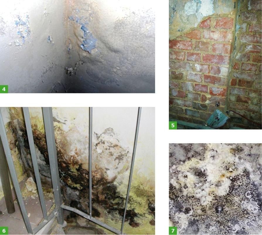 FOT. 4-7. Sole budowlane: wykrystalizowanie soli na ścianie piwnicznej (4), wykwit soli na ścianie z cegły (poniżej poziomu gruntu) (5), wykwity solne nietypowe (były budynek poprzemysłowy) (6), krystalizacja soli na powierzchni betonowej (kształtowanej na odpadach przemysłowych) (7); fot. archiwa autorów