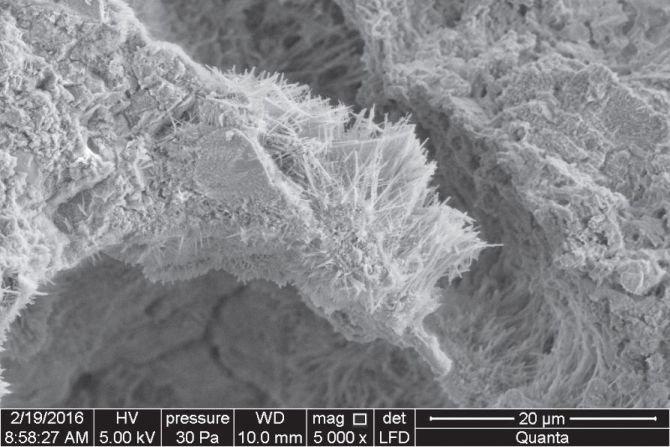 Rozbudowana struktura porów kleju wypełniona żelem, powiększenie 5000× Fot. Atlas