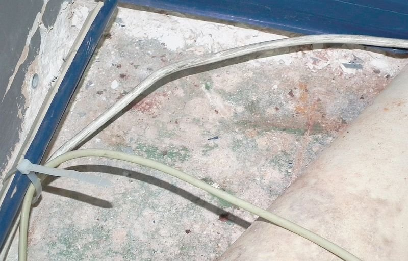 FOT. 6. Grzyby pleśniowe pod wykładziną podłogową (strop nad wilgotną piwnicą); fot.: J. A. Rubin, B. Orlik-Kożdoń