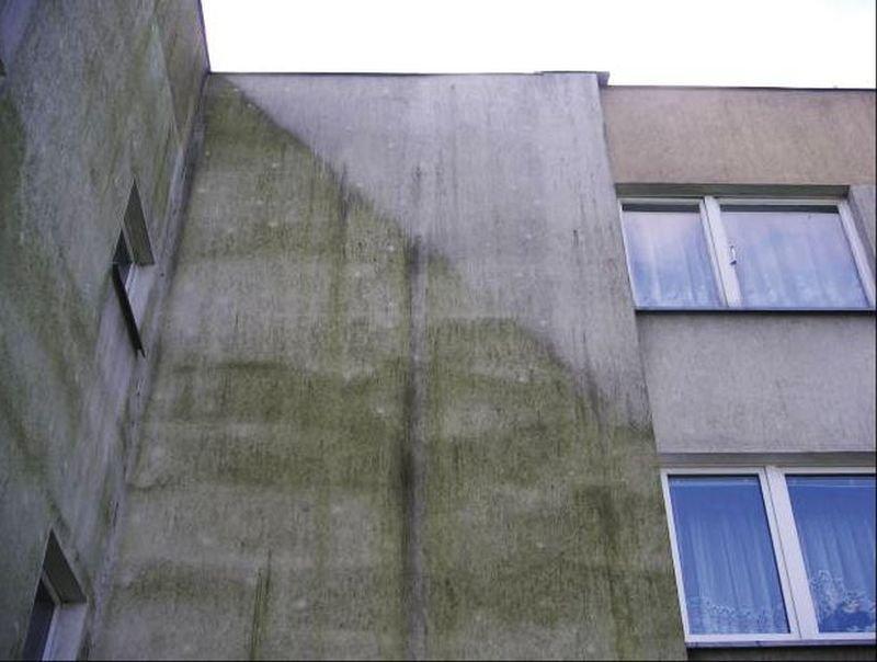 FOT. 11. Porośnięta część elewacji zacienionej innym elementem budynku; fot.: archiwum autora