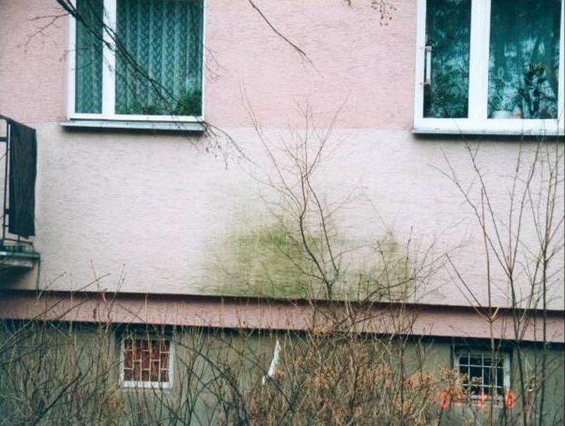 FOT. 13. Zielone plamy na części ściany osłoniętej roślinnością; fot.: archiwum autora