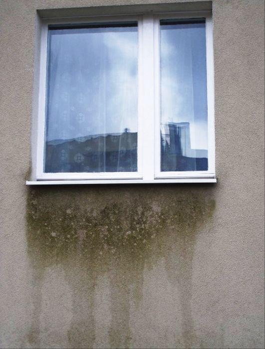 Fot. 21. Zacieki pod nieszczelnie zamontowanym parapetem okiennym porośnięte glonami; fot.: archiwum autora