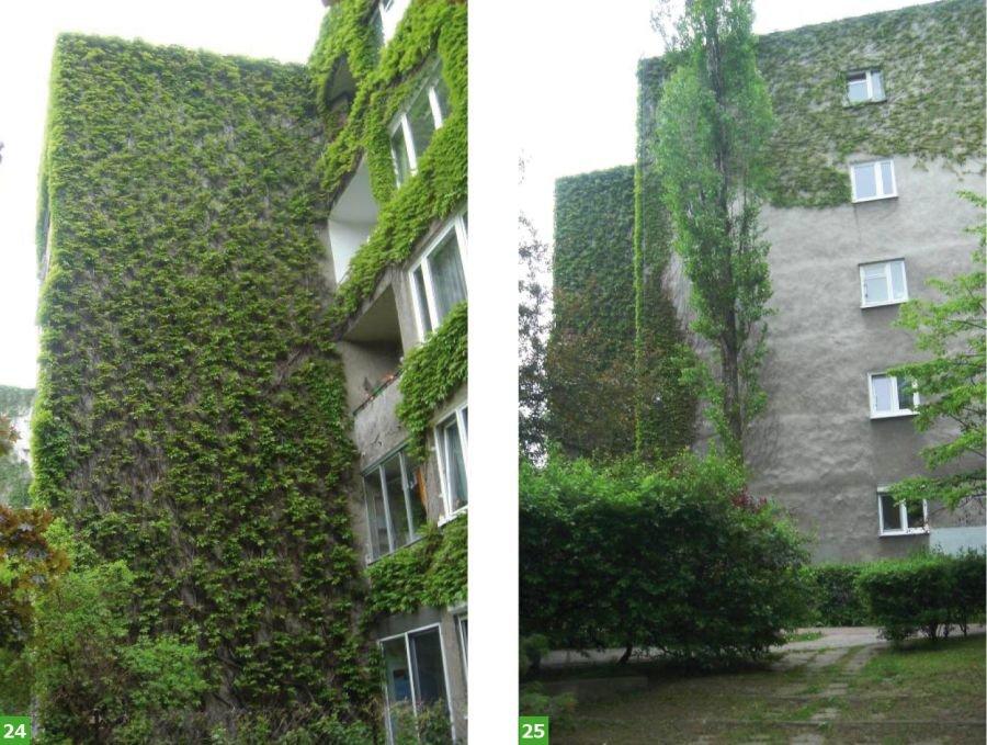 Fot. 24-25. Budynki mieszkalne porośnięte pnączem; fot.: archiwum autora
