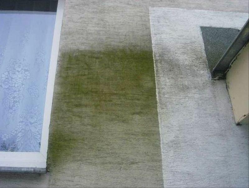 FOT. 3. Nalot na ścianie budynku świadczący o agresji mikrobiologicznej; fot.: archiwum autora
