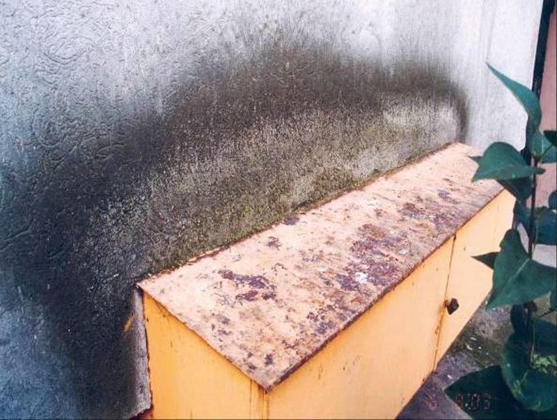 FOT. 5. Nalot nad daszkiem przylegającym do ściany; fot.: archiwum autora