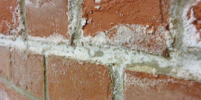 FOT. 1. Krystalizacja soli na powierzchni muru; fot.: B. Monczyński