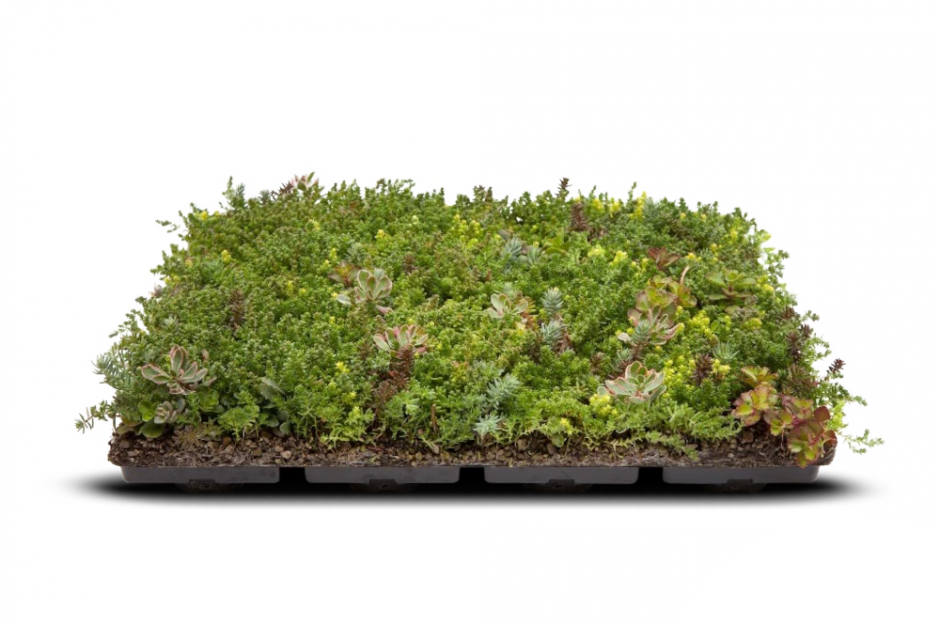 soprema modulowy zielony dach tundra pack
