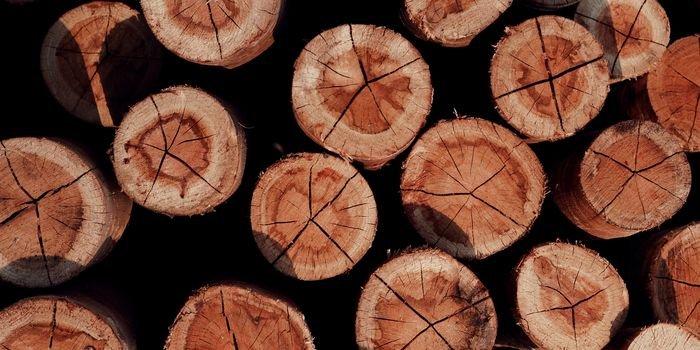Rośnie znaczenie deklaracji środowiskowych EPD, fot. Związek Pracodawców Producentów Materiałów dla Budownictwa